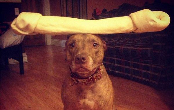 Скаут – самая спокойная в мире собака в блоге Фото юмора - №2