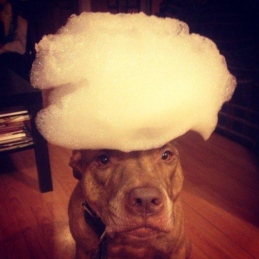 Скаут – самая спокойная в мире собака в блоге Фото юмора - №6