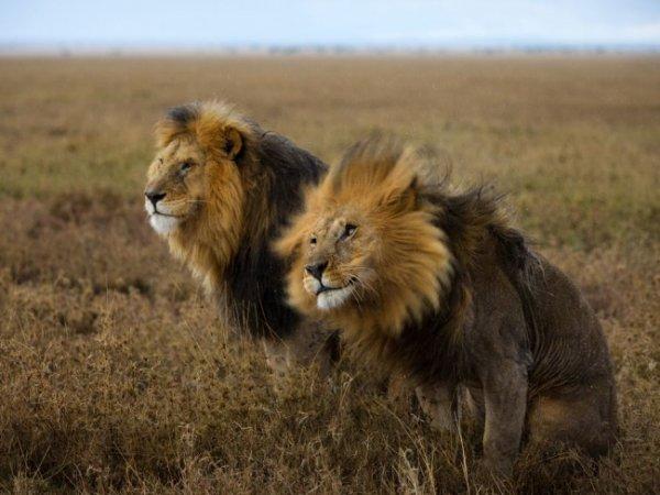 Удивительные и красивые фото кадры природы - №13