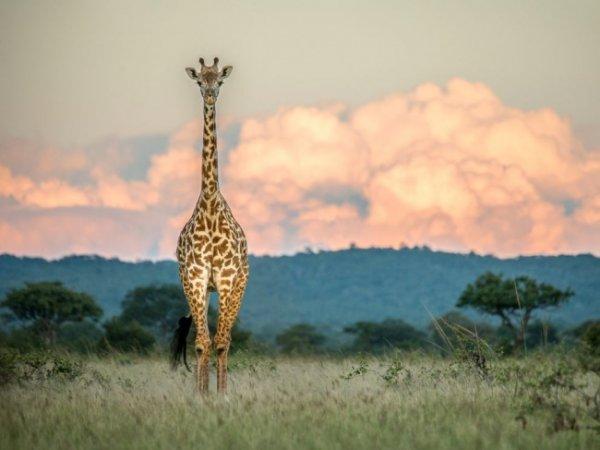 Удивительные и красивые фото кадры природы - №25