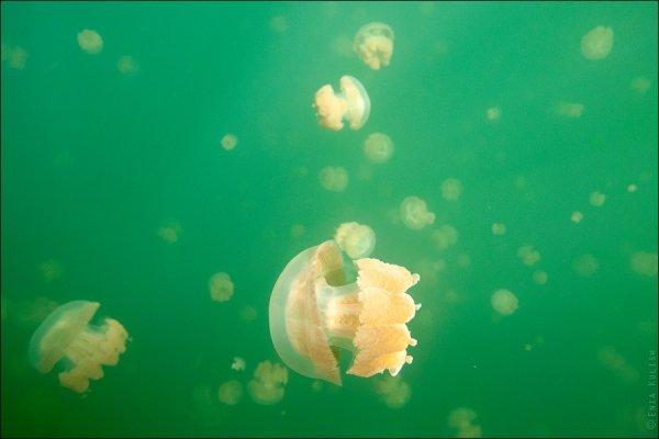 Красивые фото озера медуз - №17
