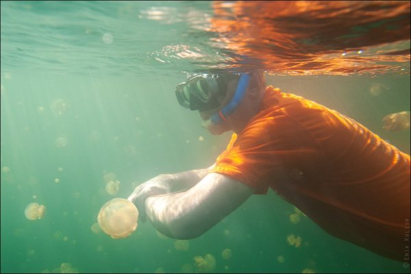 Красивые фото озера медуз - №21
