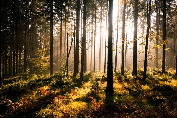 Восхитительные фото пейзажи из Германии. Andreas Wonisch - №12