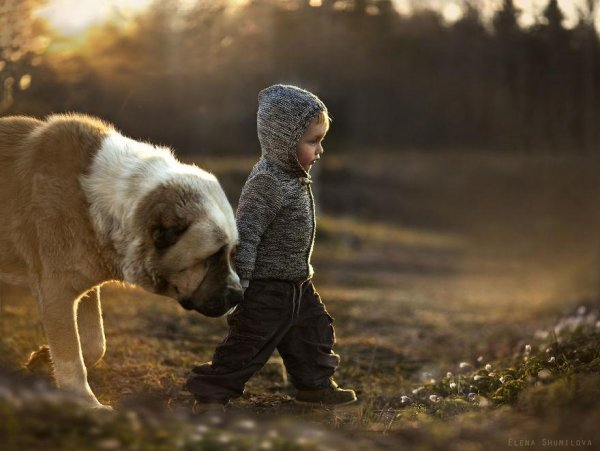 Очаровательные фото кадры - дети и животные - №1