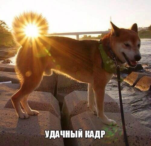 Немного фото юмора! - №16