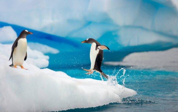 Загадочно спокойный мир Антарктиды - №15