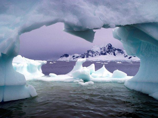 животный мир Антарктиды