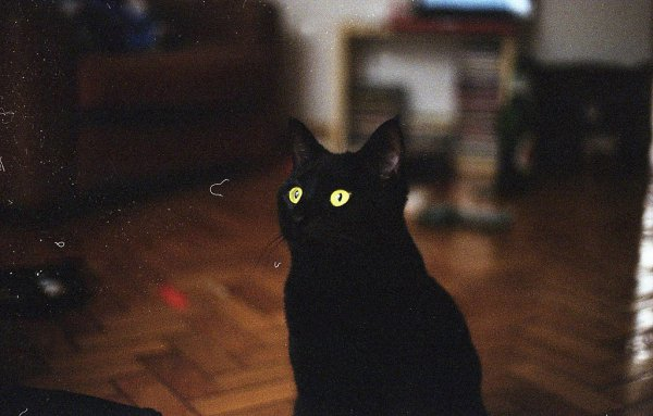 Кошки в восхитительных и милых фото - №1