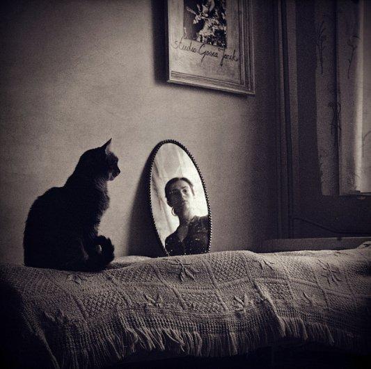 Кошки в восхитительных и милых фото - №5