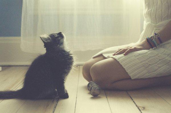 Кошки в восхитительных и милых фото - №9