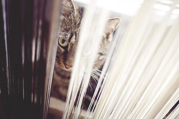 Кошки в восхитительных и милых фото - №17
