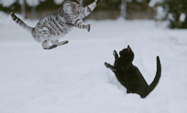 Кошки в восхитительных и милых фото - №21