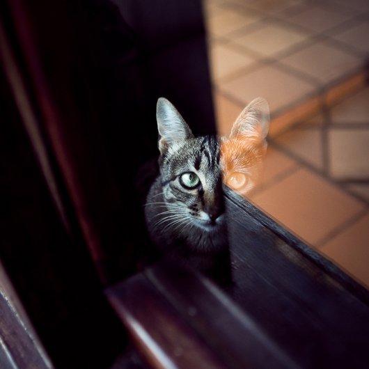 Кошки в восхитительных и милых фото - №25