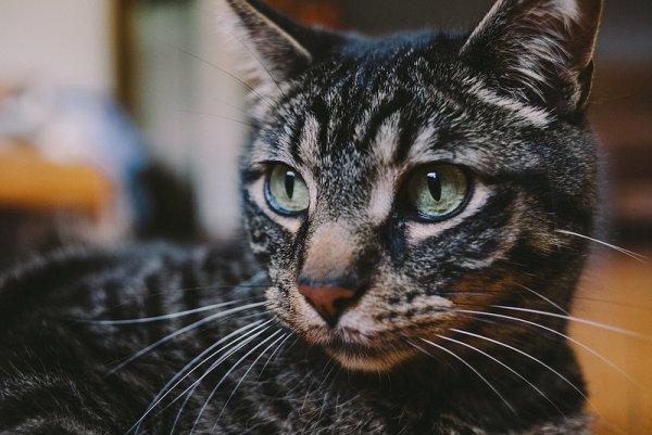 Кошки в восхитительных и милых фото - №29