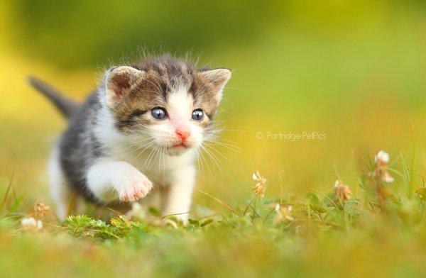 Кошки в восхитительных и милых фото - №33