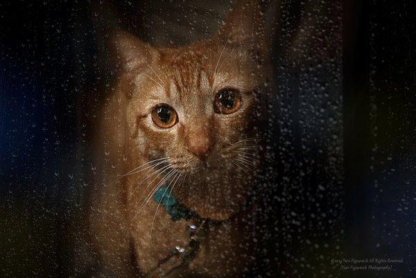 Кошки в восхитительных и милых фото - №37