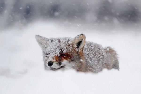 Насладитесь милыми фотографиями рыжей лисы - №7