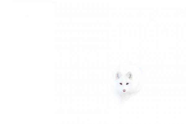 Насладитесь милыми фотографиями рыжей лисы - №11