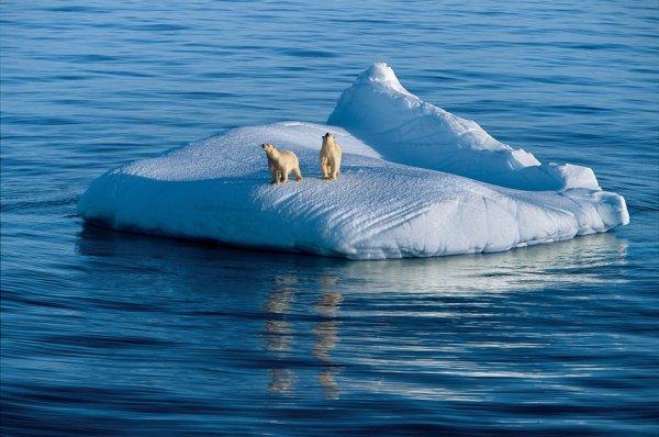 Медведица и ее двухлетний детеныш дрейфуют на льдине. Гудзонов пролив, Нунавут, Канада.