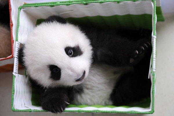китайский заповедник панд