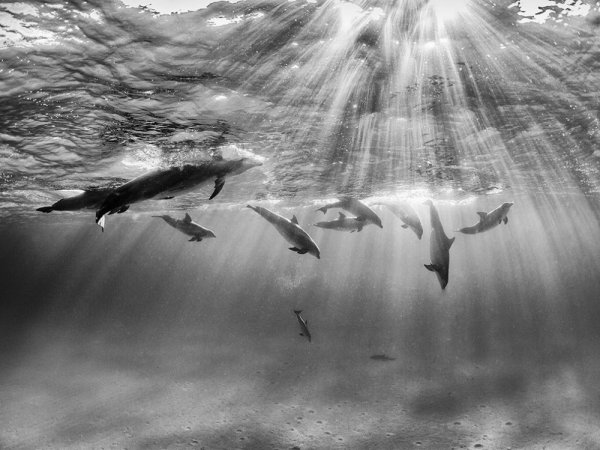 удачный кадр фото - Игра дельфинов. © Nadia Aly