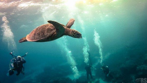самые удачные кадры - Подводный мир. © RawSquirrel