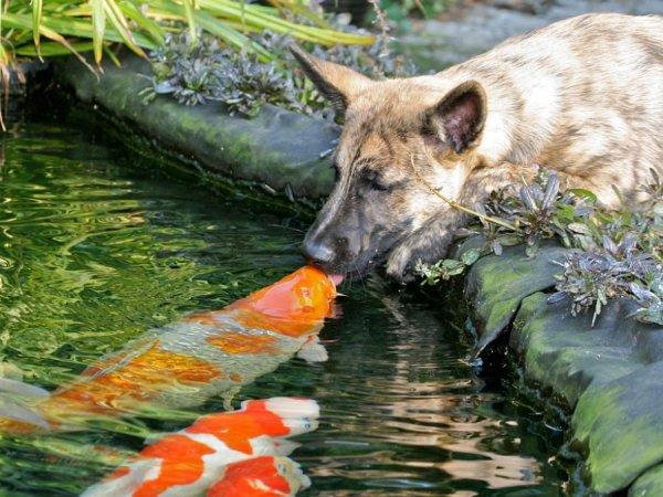 смотреть животный мир