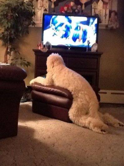 9. Смотрят телевизор.