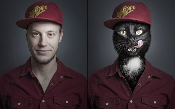 домашние животные кошки