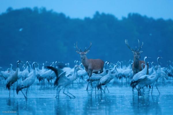 смотреть дикая природа © Marek Kosinski