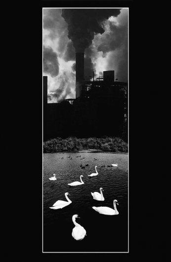Лебединое озеро   /   Swan Lake