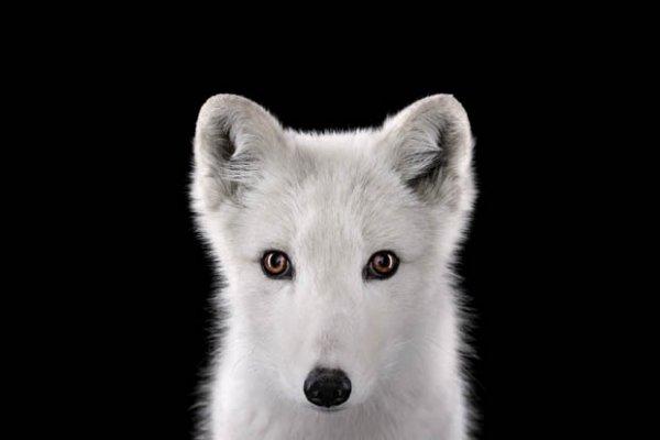 фото дикие животные