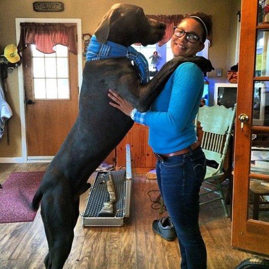 самые большие собаки