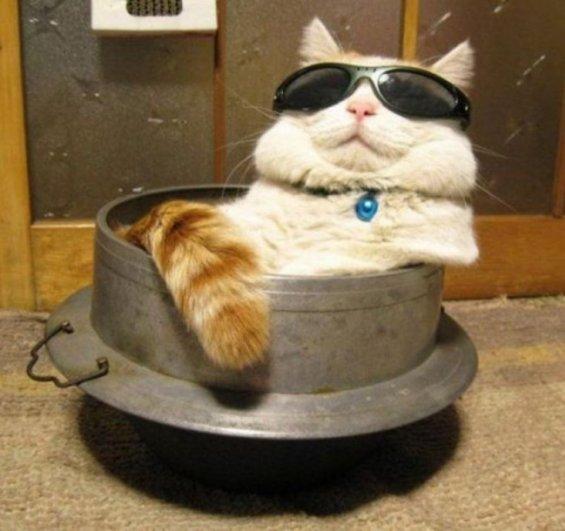жизнь глазами кота