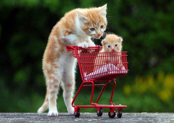 фотографии домашних кошек