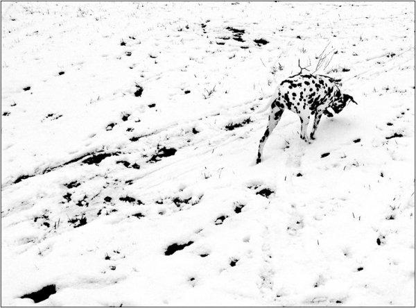 """Фотограф Дмитрий Зверев (рубрика """"Вдохновение"""") - №31"""