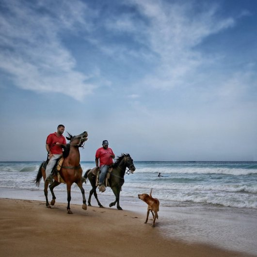 Surfing, Riding and Barking