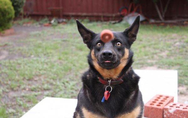 Удачные фото хозяина с собаками 6