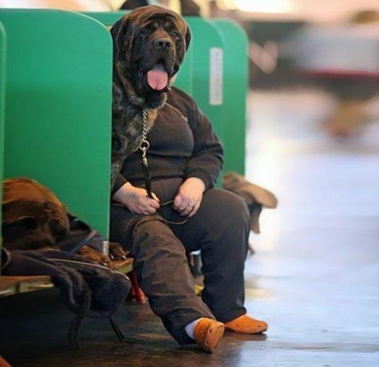 Удачные фото хозяина с собаками 10