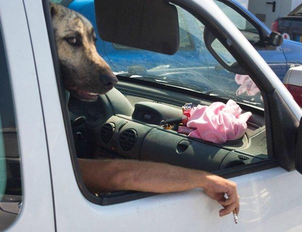 Удачные фото хозяина с собаками 22