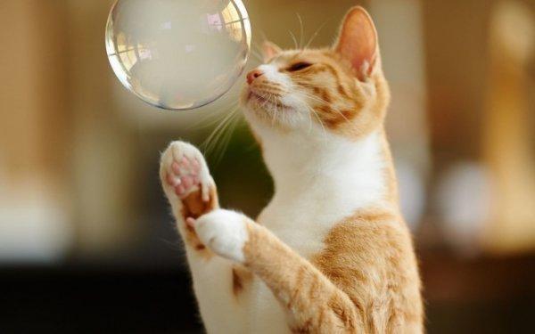 домашние мыльные пузыри