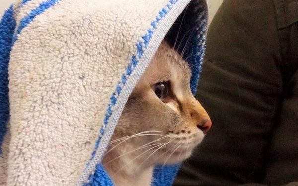 самые милые коты фото
