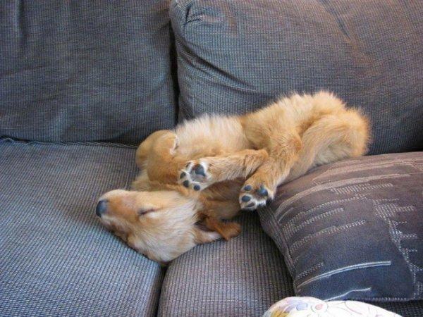 милые щенки фото