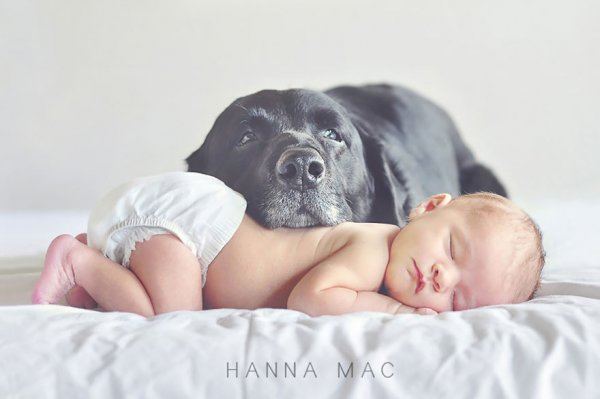 Лучшая собака для ребенка 4