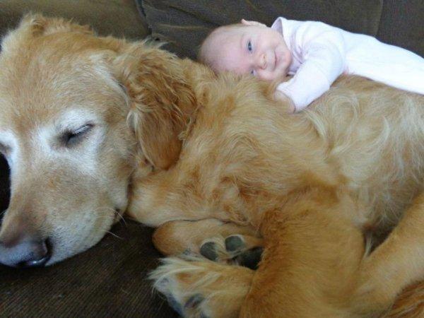 Лучшая собака для ребенка 8