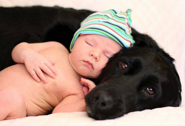 Лучшая собака для ребенка 12