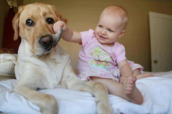 Лучшая собака для ребенка 16
