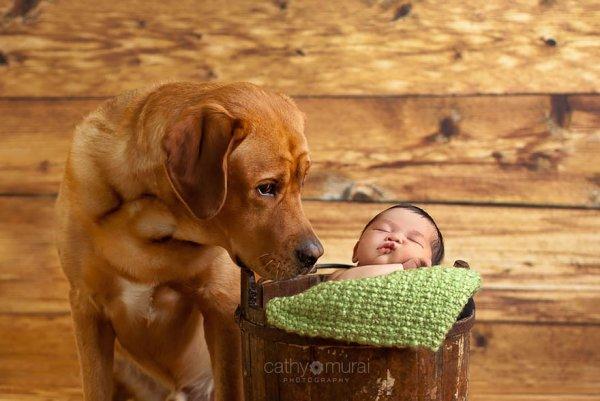 Лучшая собака для ребенка 20