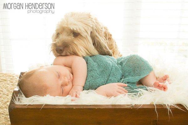 Лучшая собака для ребенка 24