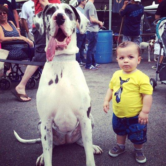 Лучшая собака для ребенка 28